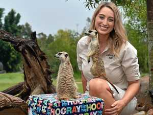 Hip hip hooray! Meerkat twins celebrate second birthday