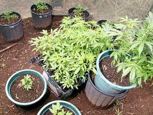 MAJOR DRUG BUST: 33 arrested, 234 plants seized