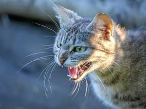 Warwick woman on a mission to stop cat attacks
