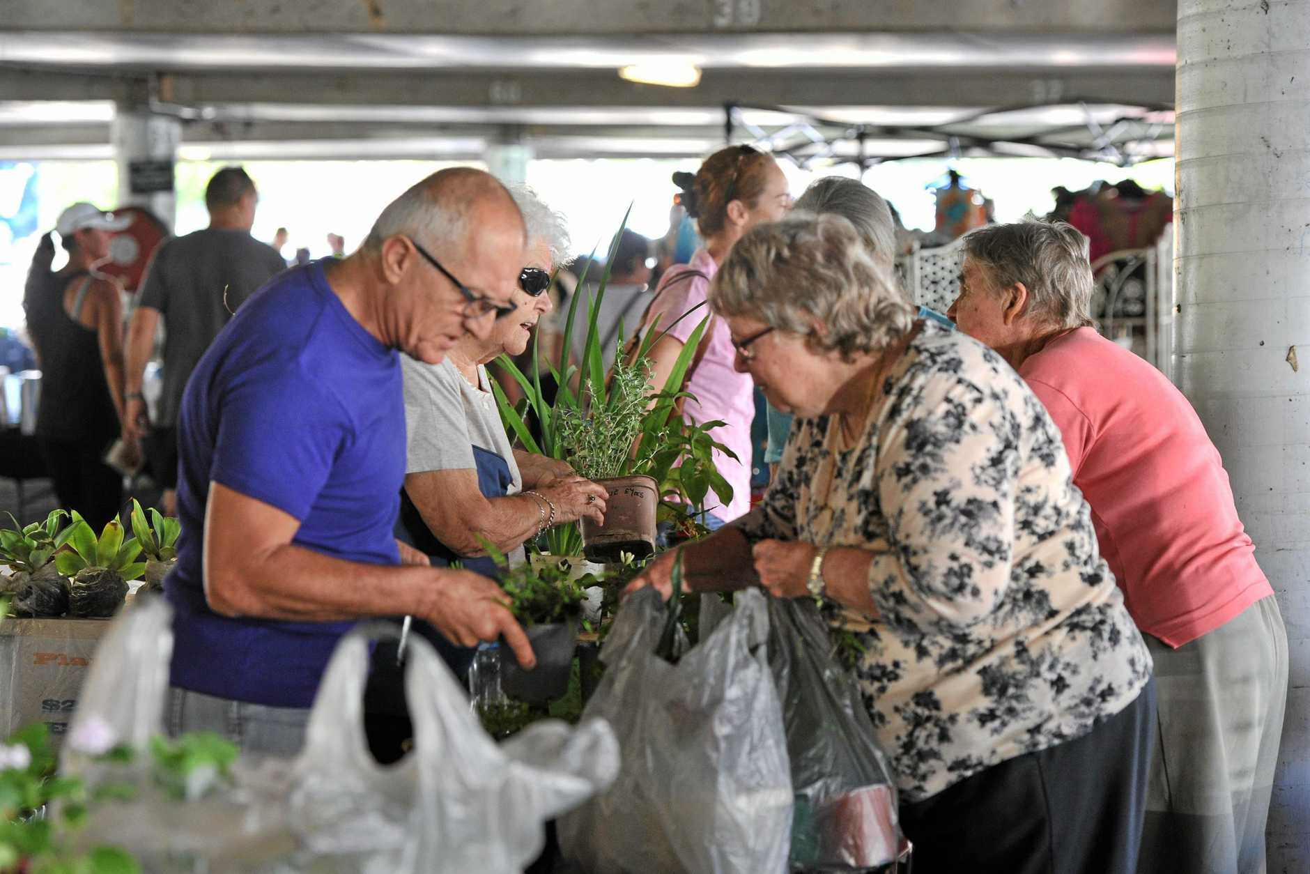 Plants are always populat at the Gladstone Rotary Kmart markets.