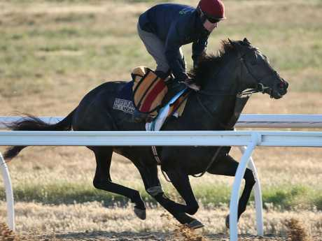 Aidan O'Brien-trained The Cliffsofmoher is third favourite for Saturday's Caulfield Cup. Picture: Michael Klein