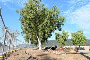 Historic trees given reprieve