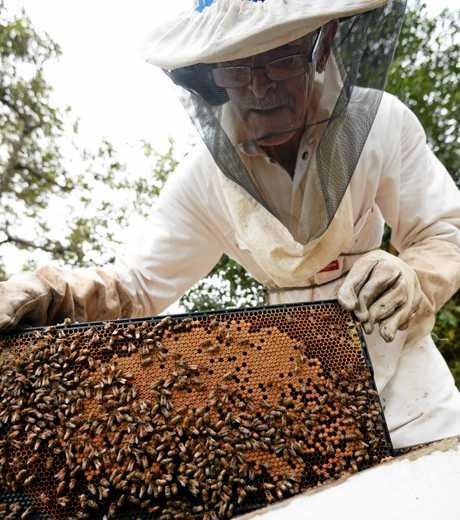 Beekeeper Eddie McKee.