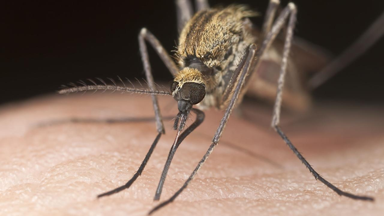 James Cook University researchers have found a link between the flesh-eating Daintree Ulcer and mosquitoes