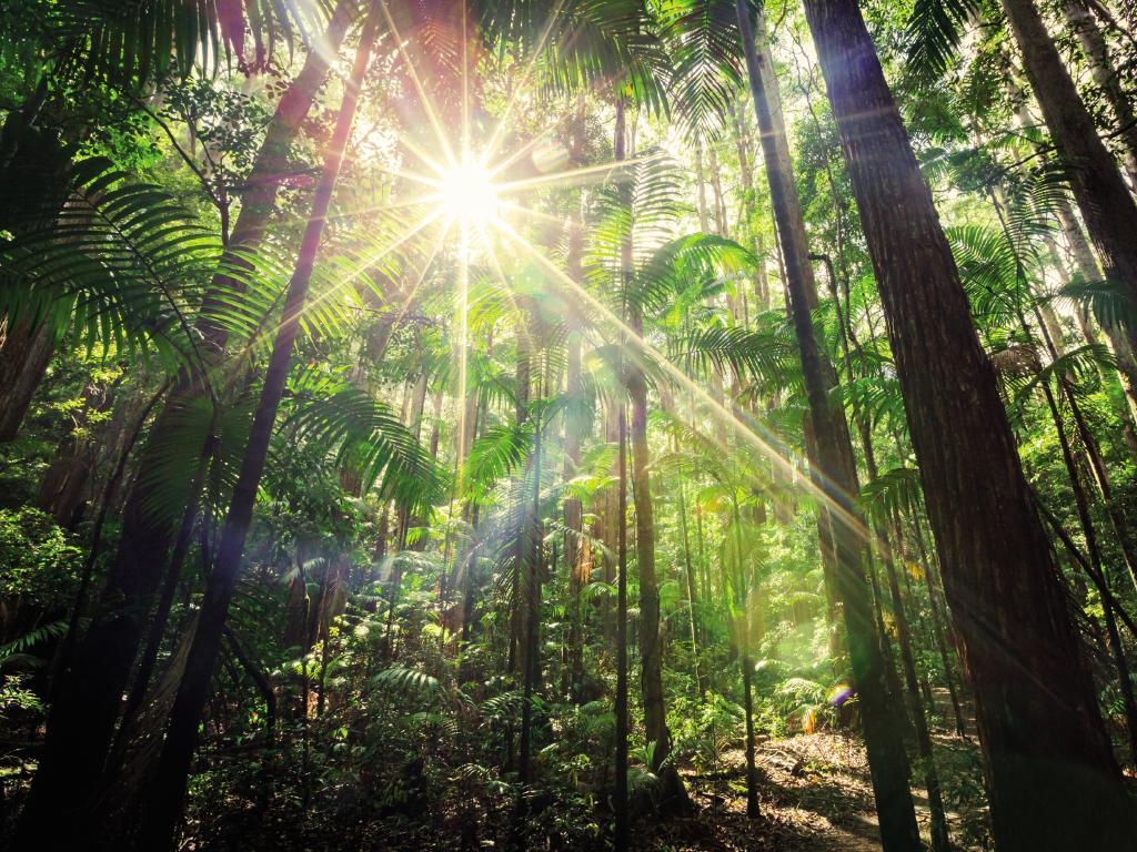Central Station rainforest walk, Fraser Island. Picture: Kingfisher Bay Resort