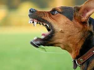 Dog attacks force bans by energy company