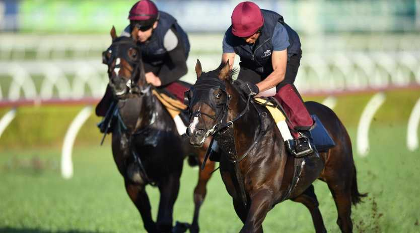 Irish sprinter US Navy Flag (right) works with stablemate Somerset Maugham at Canterbury Park in Sydney this month.