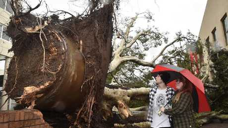 Tyler Denver and Jessica Ellis look at the large tree that fell in Toowoomba's Bell Street Mall. Storm damage. Photo Bev Lacey