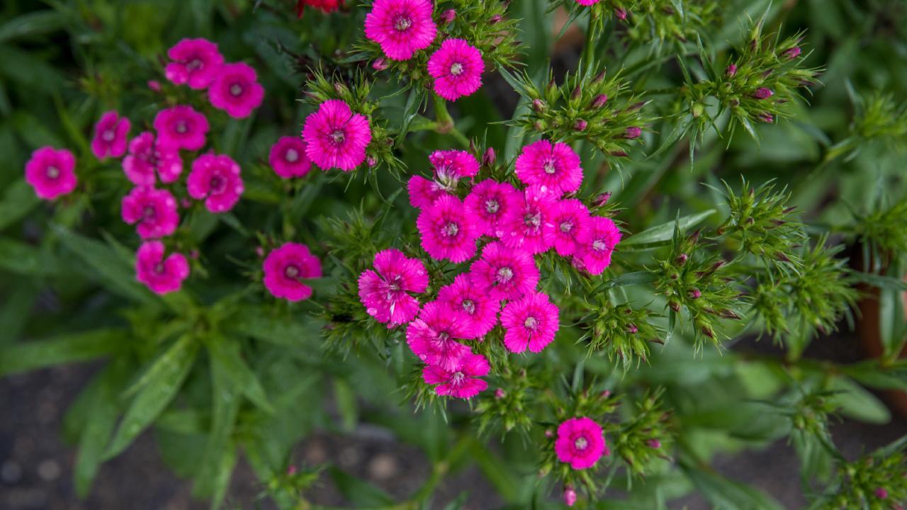Flowering plants help make gardening interesting for children. Photo: Dominika Lis
