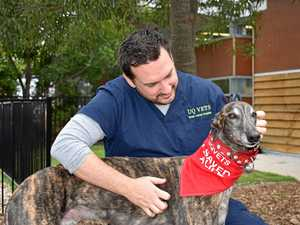 Dogs asked to donate blood in order to save lives