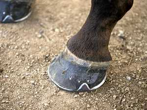 Horses allegedly castrated without pain relief