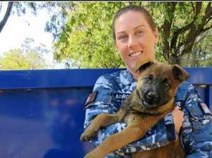 Love of RAAF puppies takes Ipswich handler around the world