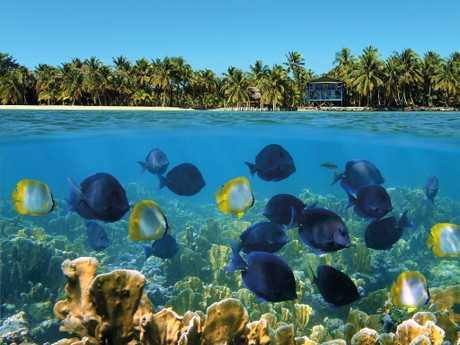 Coral reefs off Bocas del Toro on Panama's Caribbean coast. Picture: Vilainecrevette / Shutterstock