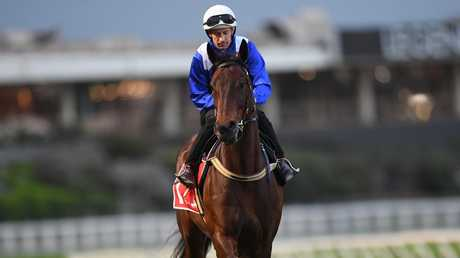 Winx is in great shape heading into the Cox Plate. Picture: AAP