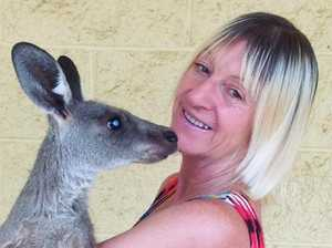 Kangaroo victim 'on the mend' after attack