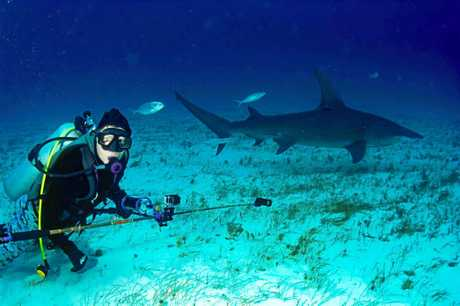 EXPERIENCED: Tony Isaacson is an experienced marine educator and prolific shark diver around the world.