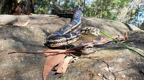 Shaun Williamson wasn't afraid to tackle this snake by himself when he found it asleep on top of his fridge on Tuesday.