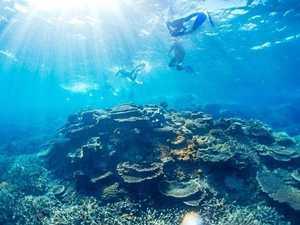 Reef raiding fishers cop hefty fines in Mackay court