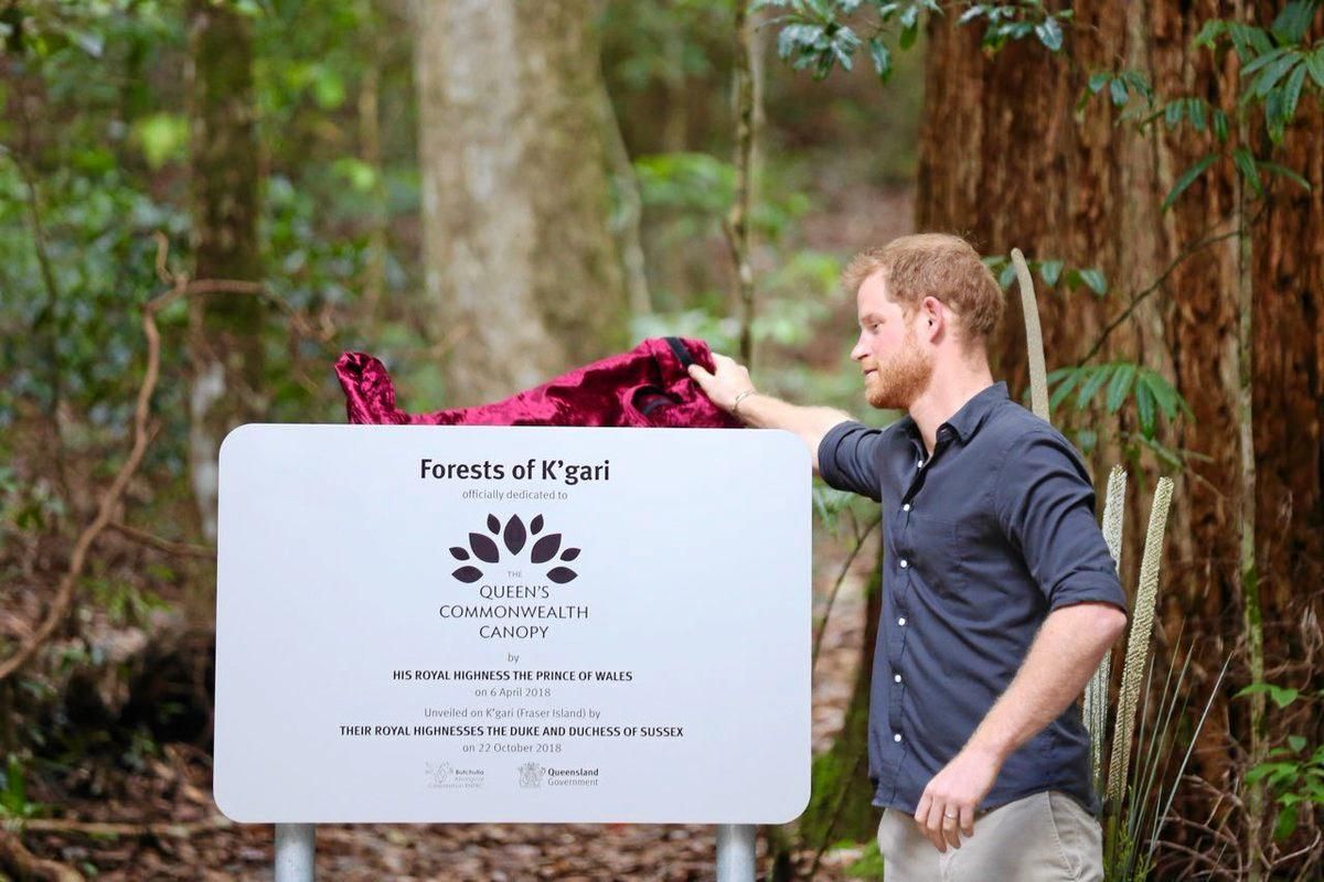 Prince Harry unveils the Queen's Commonwealth Canopy on Fraser Island today.