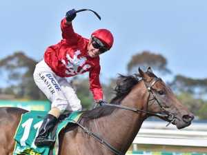 Cup doors open for Geelong-bred Runaway