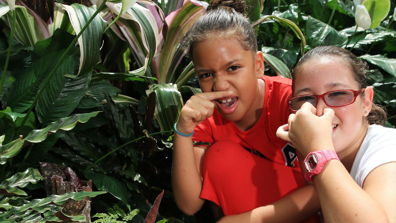 Tia Muir-Malu (8) and Molly Muir-Alley (12) are horrified at the smaller corpse lilies at the Botanic Gardens which are very stinky at the moment — PICTURE: JUSTIN BRIERTY