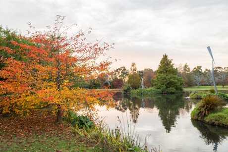 Blazing autumn colours at Cruden Farm.