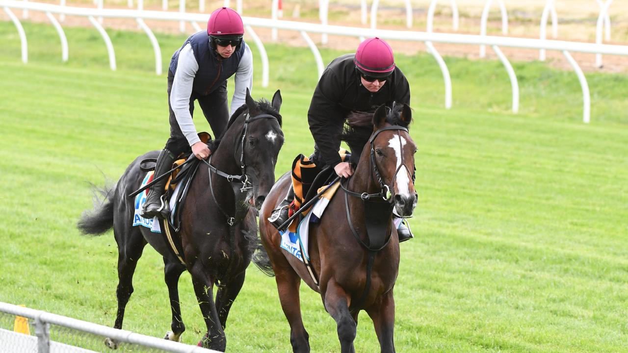 The Jason O'Brien train Latrobe and the Aiden O'Brien-trained Pentagon gallop at the Werribee Quarantine Centre on Wednesday. Picture: James Ross/AAP