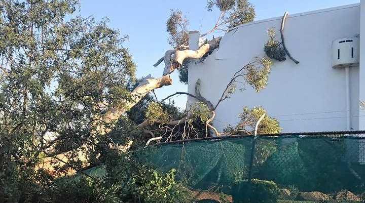 DOWN: A tree hit the Oakey Aquatic Centre.
