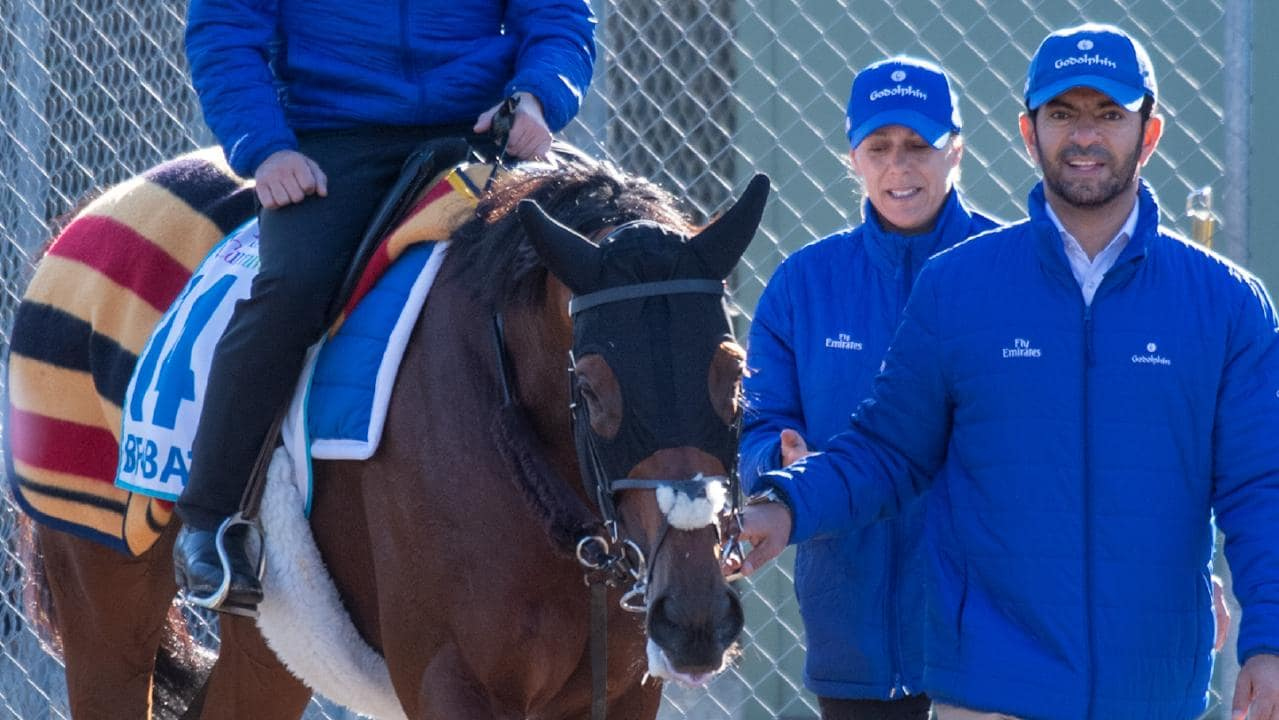 Benbatl returns to his stall after working at Werribee. Picture: Jay Town
