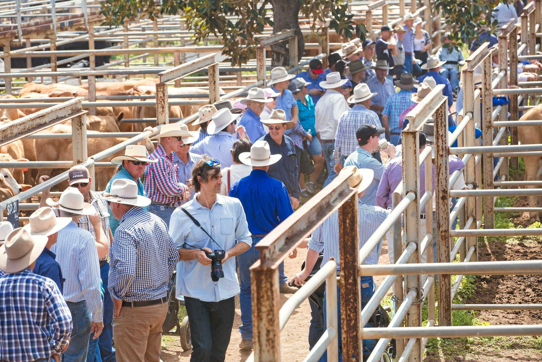 Crowd at the Clermont Beef Expo sale yards.