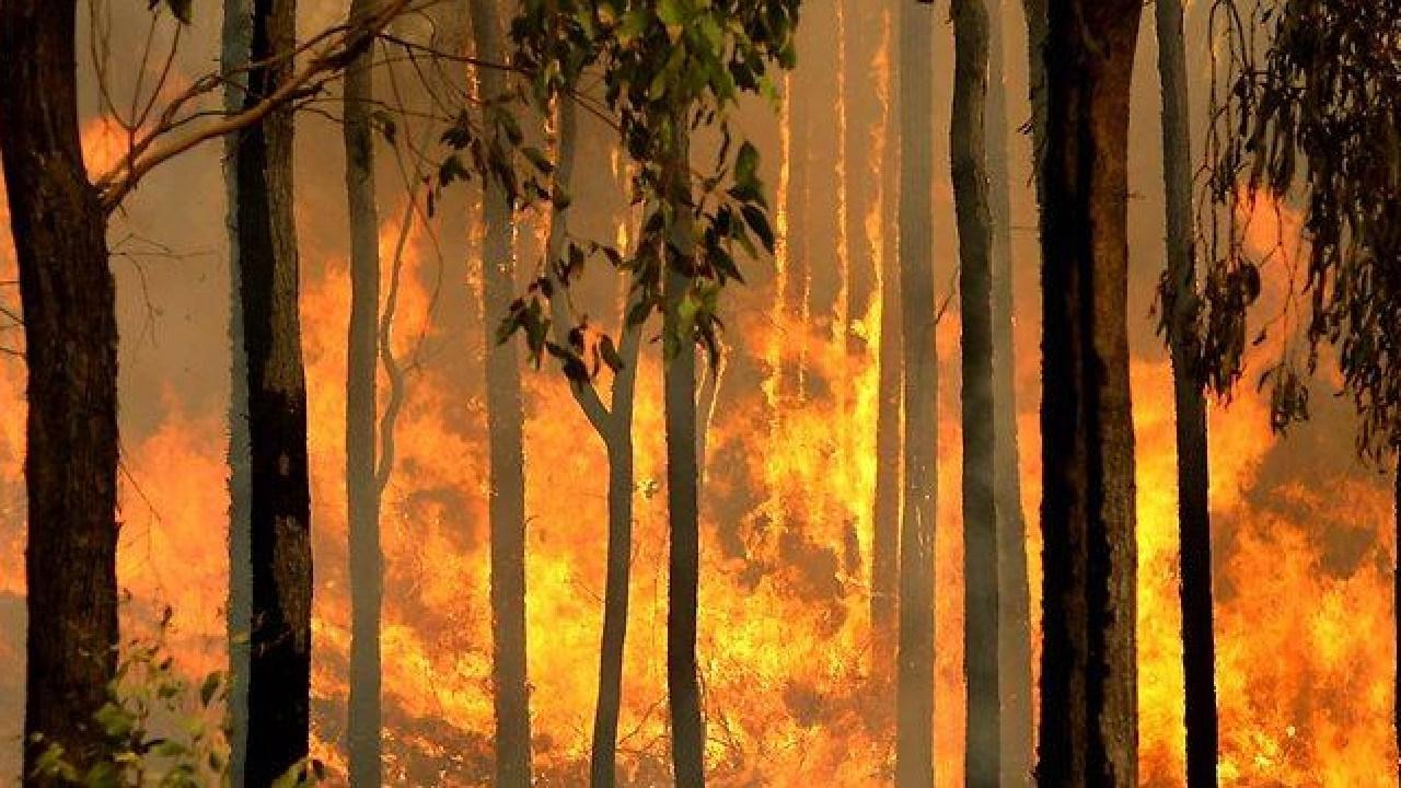 Several bushfires are burning across the region.