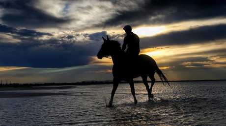 Winx during a workout at Altona Beach in 2016. Picture: Colleen Petch