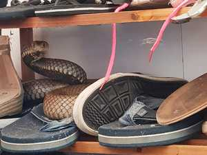 Monster brown snake found in family's shoe rack