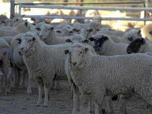 Young woolgrowers calling on their peers