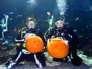 Sea Life sets underwater pumpkin-carving challenge