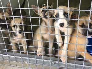 Heartbreaking neglect of pups revealed