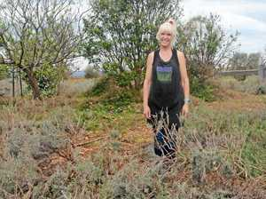 POTTERING ON: Lavender farm recovers after storm
