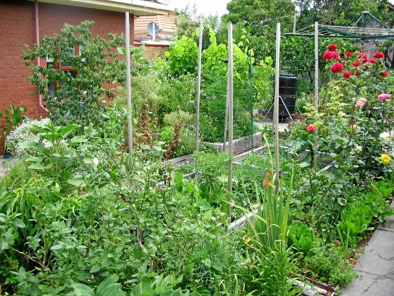 In November, food almost seems to jump out of the earth, so it's the perfect time to get started on your own 'food forest'.