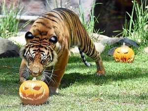 Ripping into some Halloween fun