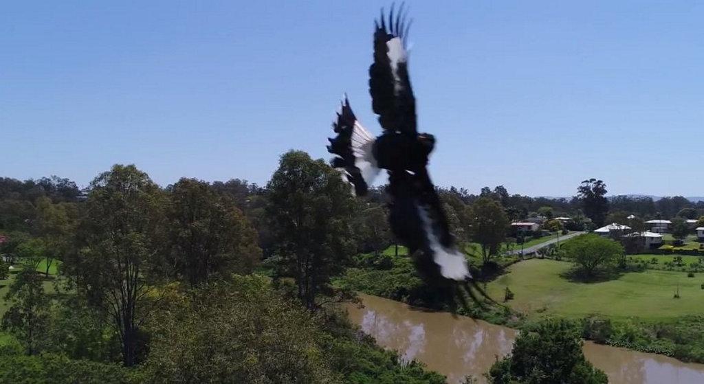 Bird vs drone.