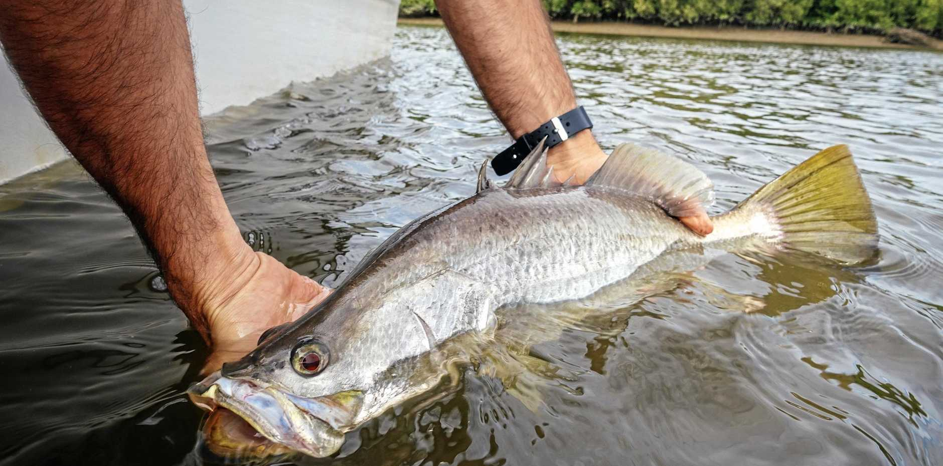 Good catch, now time to release a Barramundi at Kinchant Dam.