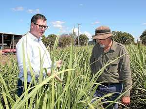 MP optimistic in face of Mackay Sugar acquisition