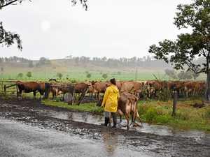 Gympie farmer slams inept pollies, 'supermarket bashing'