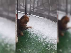 WATCH: Curious cat can't work out falling snowflakes