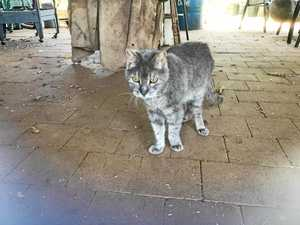 Meet one of the oldest cats in the region