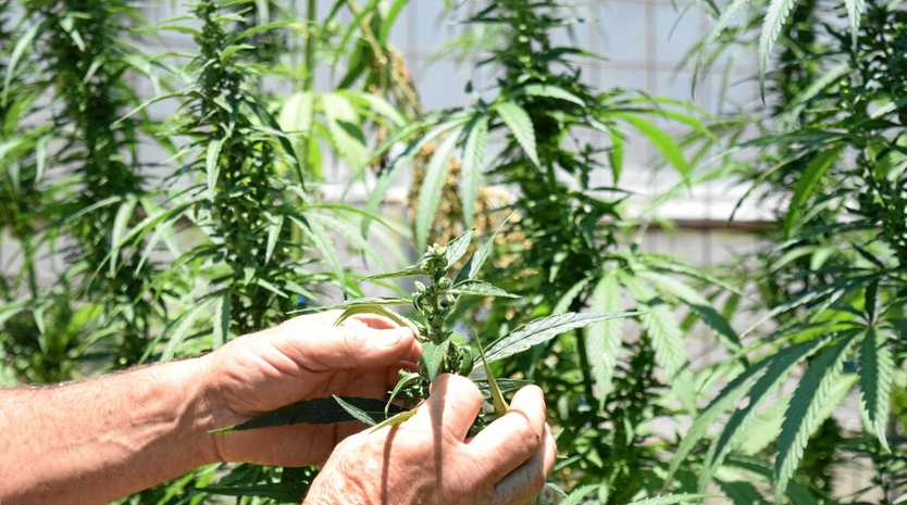A man tried to argue for the legalisation of cannabis in court as he faced three drug-related charges.