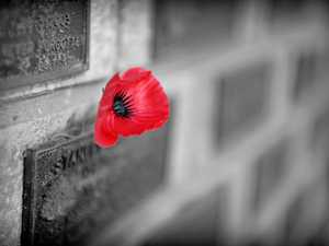 Remembering our heroes on 11/11/11