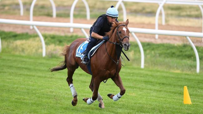 Red Verdon gallops at Werribee.