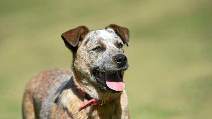 KEEPING THEM COOL: The RSCPA recommends dogs get plenty of shade during summer.