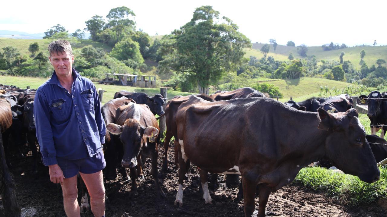Millaa Millaa dairy farmer Dan Portegys. Picture: Bronwyn Wheatcroft